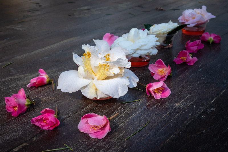 Decorative assortment of camellias on a table near the cafe at Descanso Gardens