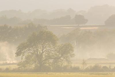 Countryside Morning
