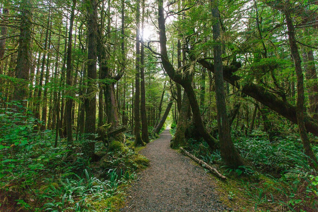 San Josef Trail, Cape Scott Provincial Park, BC