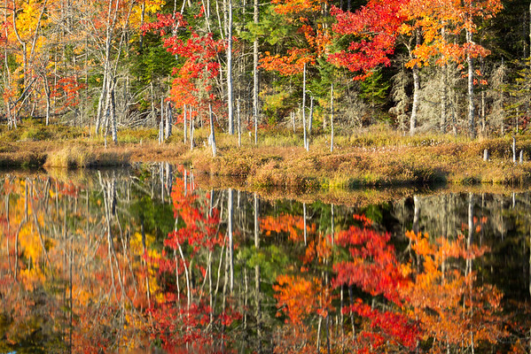 Nova Scotia Autumn Foliage