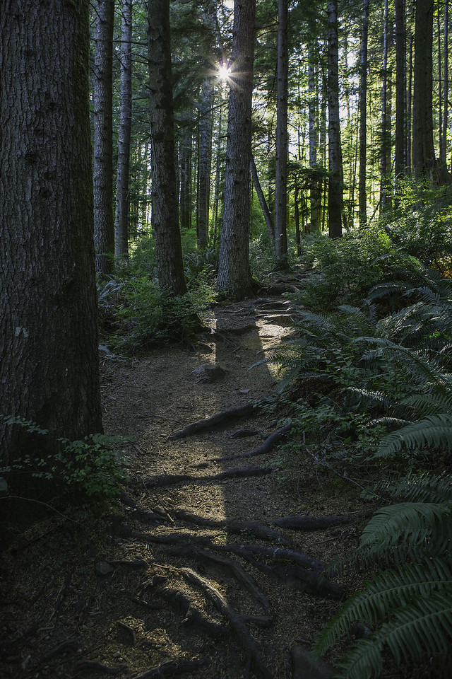 Natural steps on a West Coast Trail