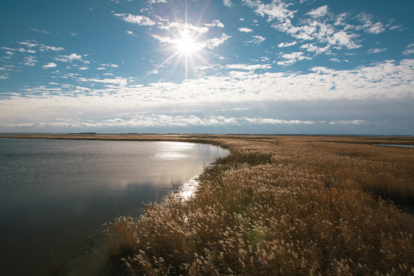 Fall in Delta Marsh, Manitoba