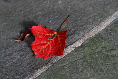 Fall leaf turned red on granite bench.