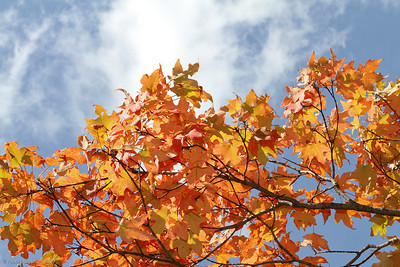 Orange, yellow, red fall foliage against a bright blue sky.