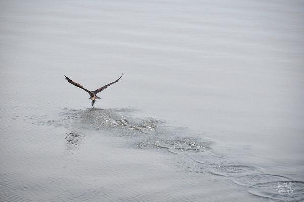 Take-off (1)