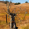 A tree with forgotten Christmas ornaments stands in front of California's golden hills