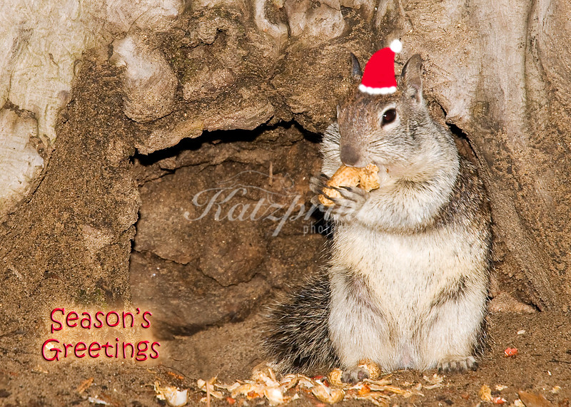 A ground squirrel is munching on peanuts in Yosemite National Park