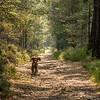 A ferocious wolf-dog playing fetch