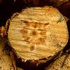Timber circles