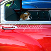 Serendipity. A little dog pops up in a Chevy Bel Air as I am photographing a classic car show. He looks at me for just a few seconds. Luckily, I have the camera ready. This is one of my best-selling photos at California art shows as it speaks to classic car and dog lovers alike.