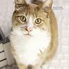 Cat Photography Session near Crossfield Alberta