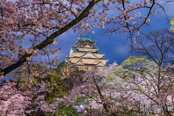 Cherry Blossom Explosion || Explosión de Flores de Cerezo