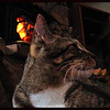 Hot Cat in front of a warm woodstove fire.