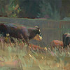 Herd Bound 6.5x16