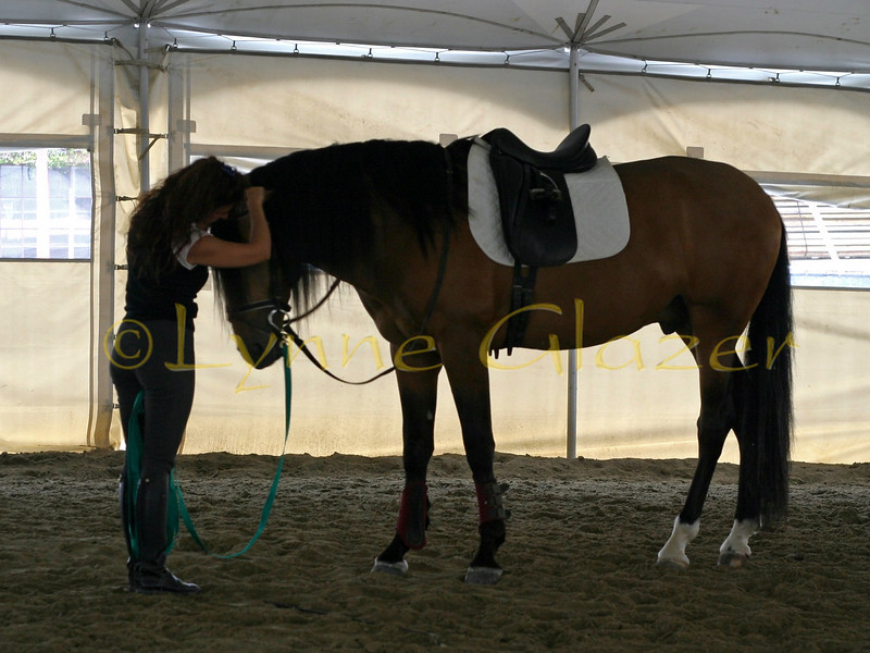 Backstage in Glendale, Magali works with Mandarin, 6 year old Lusitano stallion