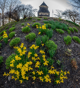 Daffodils and the Garfield Monument
