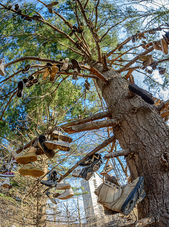 The Shoe Tree at Lake View Cemetery