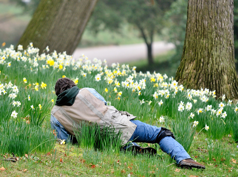 Mark Nowak - The Daffodil Whisperer!