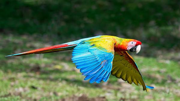 Macaws & Monkeys