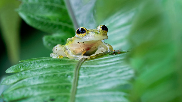 Reptiles, Frogs & other Animals