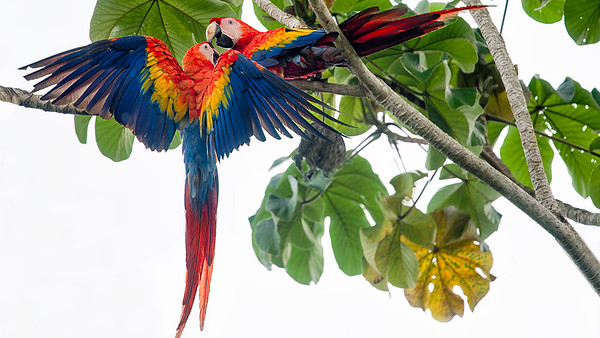 Birds of Osa Peninsula