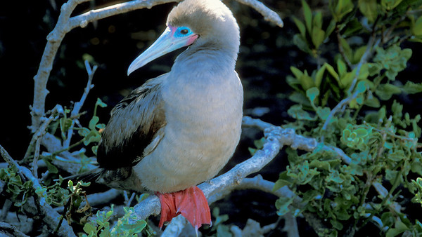 Birds of Galapagos Islands
