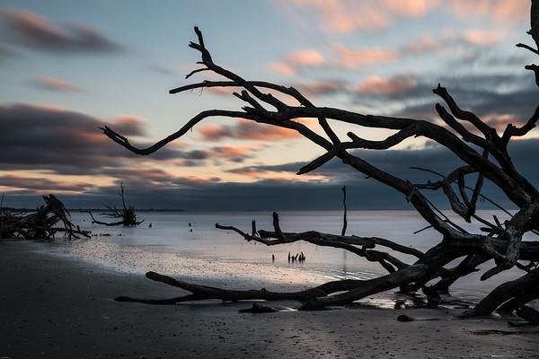 Botany Bay - Edisto Island