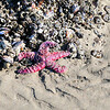 Circles in the Sand Starfish