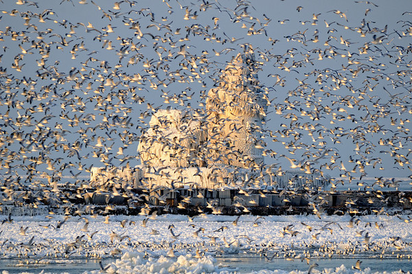 Gulls at Cleveland's Frozen Lighthouse