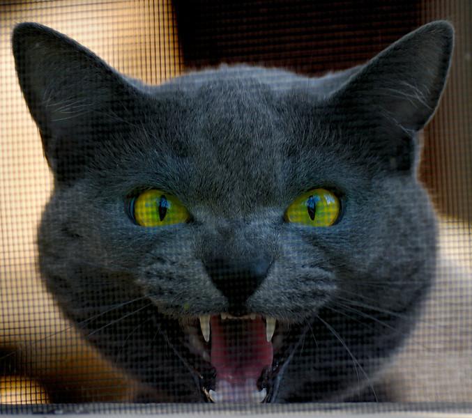 Angry Cat - Zoar Ohio
