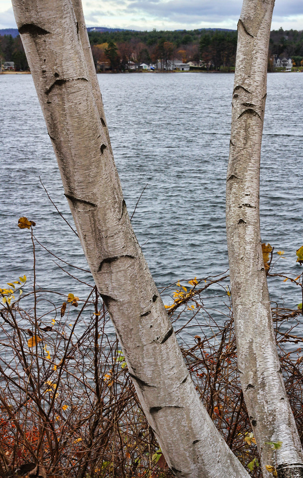 Opechee Birches 2<br /> Laconia, NH