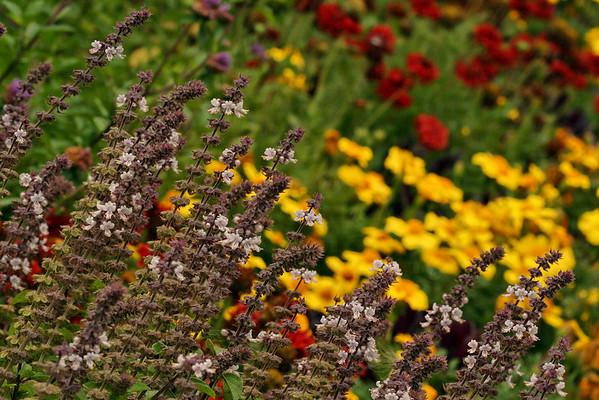 Belknap Mill Garden<br /> Laconia, NH