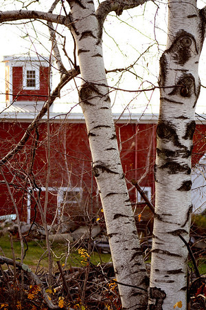 Birch and Barn II<br /> Bolduc's Farm, Laconia, NH
