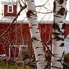 Birch and Barn II<br /> Bolduc's Farm, Laconia, NH