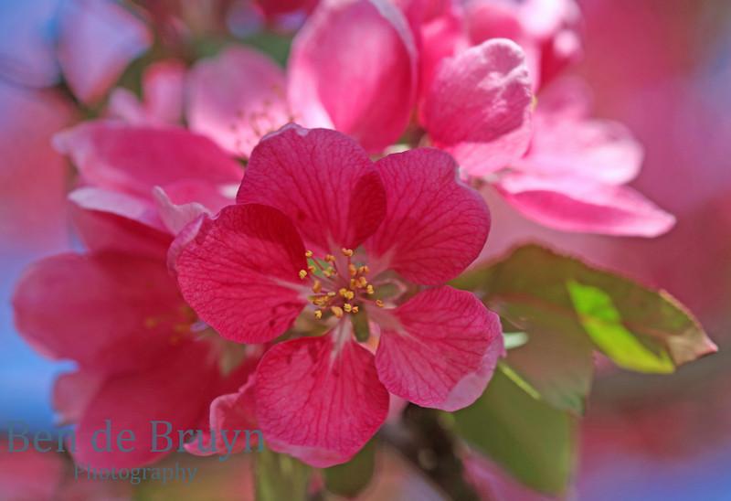 April 2011 Park Bertrand Flowers 3
