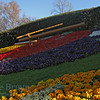 April 2010 Geneva flower clock 2