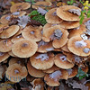 Geneve autumn mushrooms view 4