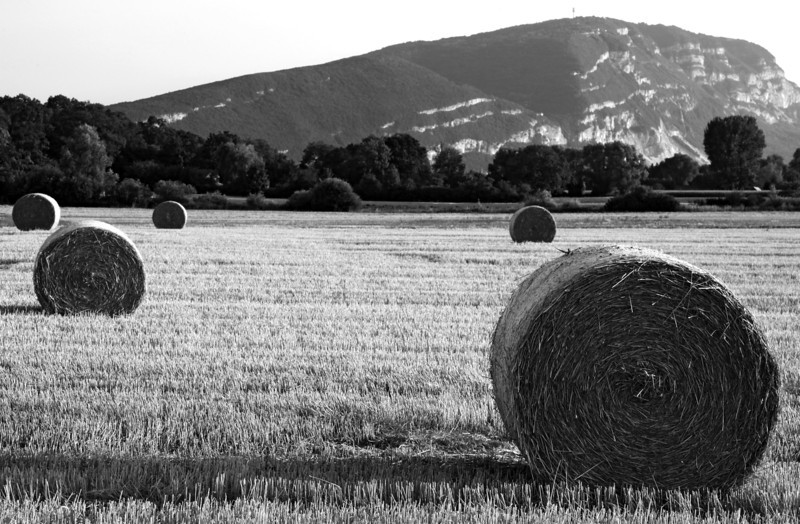 Aug 2013 Geneve Vandouvre region bales 2