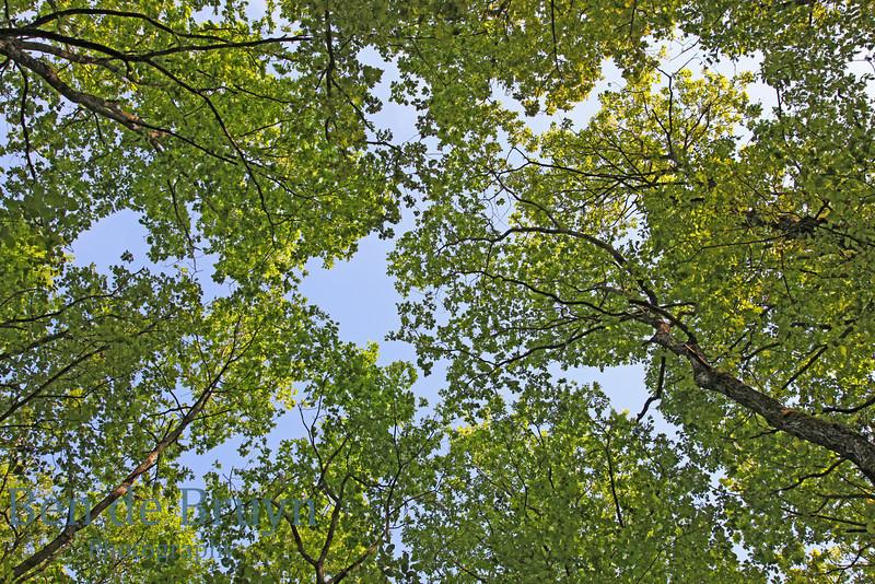 April 2011 Geneva Forest Walk near Jussy 1