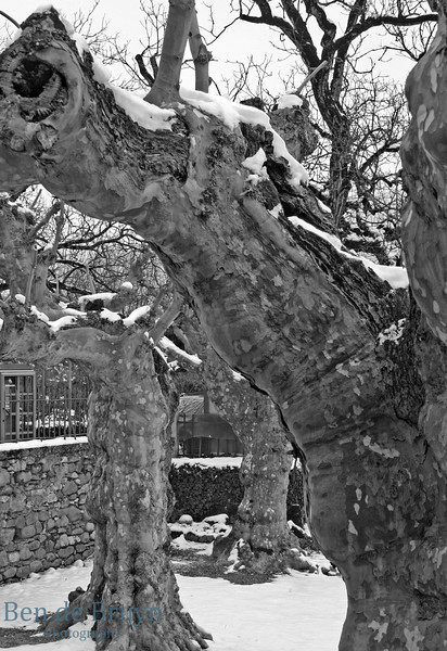 2010 Geneve Trees Malagnou neighbourghood 2