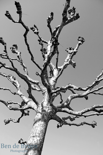 April 2013 Geneva Tree waiting for Spring