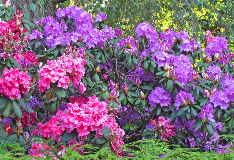 May 2010 Malagnou area spring 2