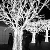 Dec 2010 Christmas lights 3