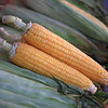 June 2012 Istanbul Corn
