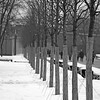 Trees lined up in the snow in Alexander Gardens Moscow Russia