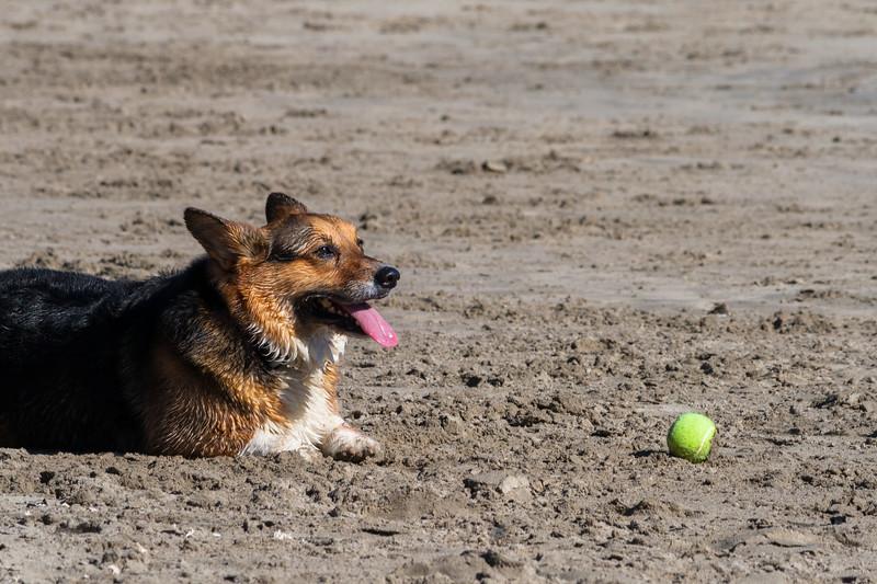 Crogi and the Ball