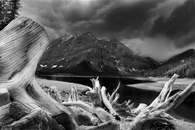 Deadwood framing an approaching storm in Kananaskis, Canada  Featured photo in Shutterbug's October 2012 mgazine