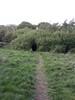 Dan - Black (bush) hole