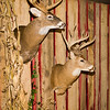 20141119_031a_Deer-Expo-Pittsfield-IL-AOG_pr1