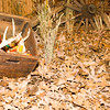 20141119_015a_Deer-Expo-Pittsfield-IL-AOG_pr1